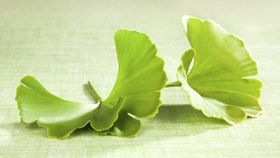 What Side Effects Does Ginkgo Biloba Cause?