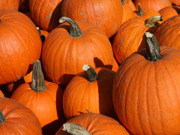 5 Fun Ways to Get Your Pumpkin Fix