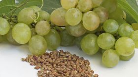 Can Grape Seed Extract Help Treat Prostate Cancer?