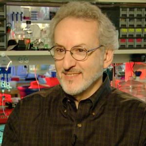 Dr. Don Ingber, MD