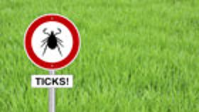 Four Tips to Stop Ticks and Prevent Lyme Disease