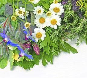 Herbs That Halt Headaches?