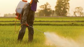 Is there any connection between Parkinson's disease and exposure to pesticides?
