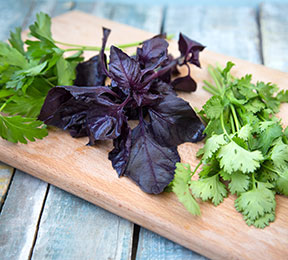Three Herbs That Sweeten Your Breath