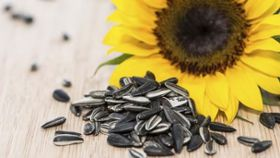 Nibble Sunflower Seeds for a Sharp Memory