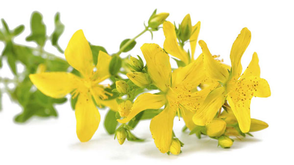 Is St. John's Wort Effective in Treating Depression?