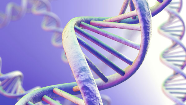 Is Fibromyalgia Genetic?