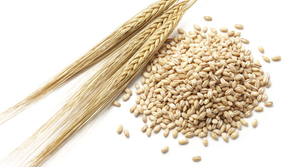 Try Barley to Lower Cholesterol and Lose Weight