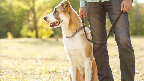 Why Your Dog Is Your Best Walking Partner